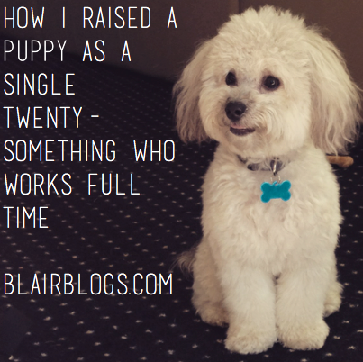 How I Raised a Puppy as a Single Twenty-Something Who Works Full Time | Blair Blogs
