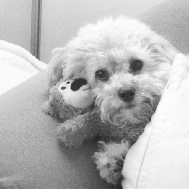 2 Years With My Charley | Blairblogs.com