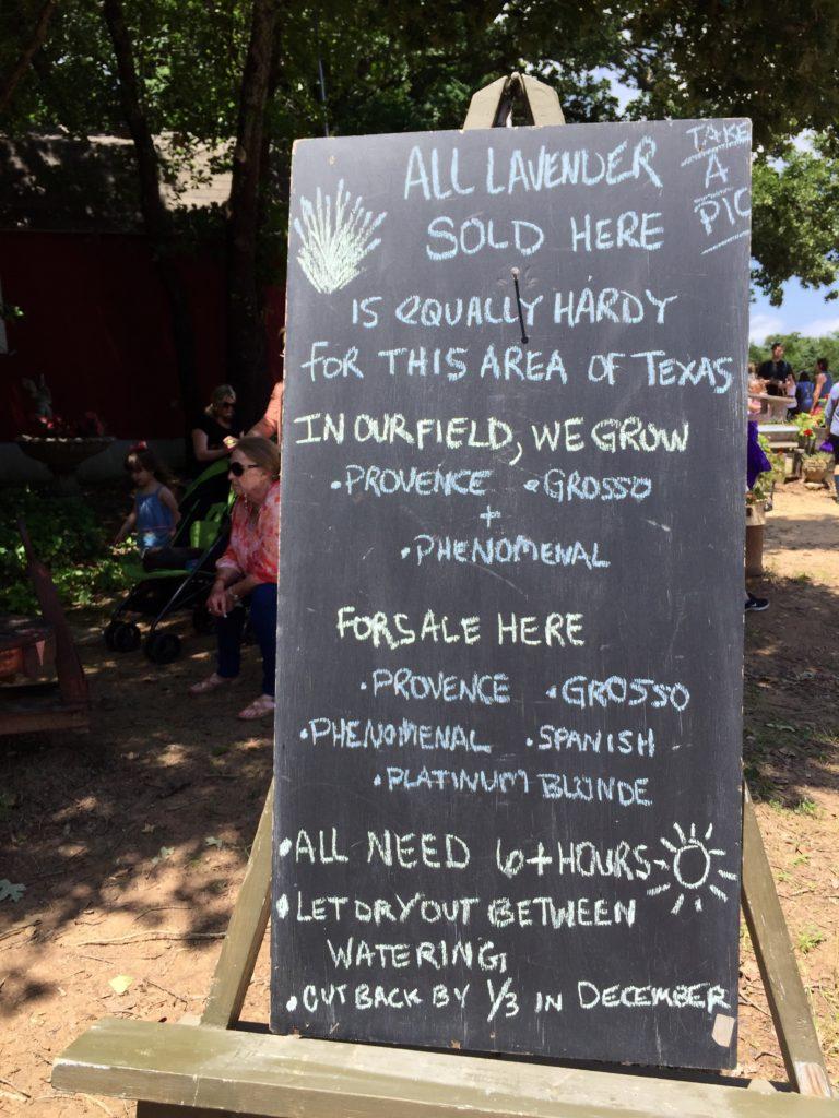 Lavender Festival | BlairBlogs.com