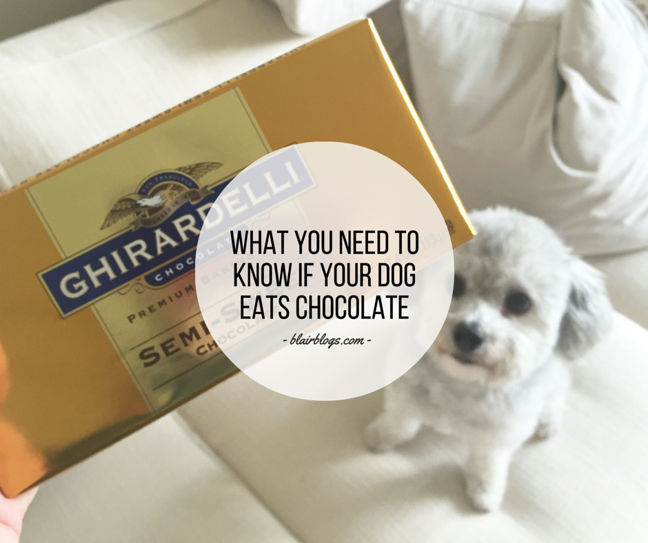 What You Need To Know If Your Dog Eats Chocolate |BlairBlogs.com